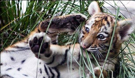 Hình ảnh động vật ngộ nghĩnh nhất năm 2010