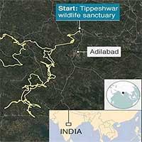 Hổ lập kỷ lục đi hơn 1.300km trong 5 tháng