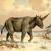 Hóa ra kỳ lân trong truyền thuyết là có thật ngoài đời nhưng nó xấu kinh khủng