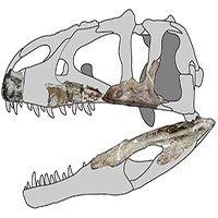 Hóa thạch 114 triệu năm tiết lộ