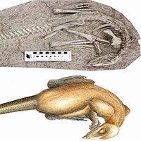 Hóa thạch 125 triệu năm của khủng long bị chôn sống