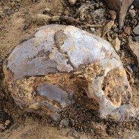 Hóa thạch 13 triệu năm của tổ tiên loài người