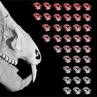 Hóa thạch 185 triệu năm của sinh vật cổ đại có 38 con