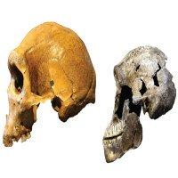 Hóa thạch 335.000 tuổi đảo lộn lý thuyết tiến hóa con người