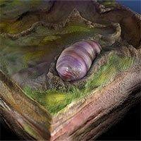 Hóa thạch 555 triệu năm của tổ tiên loài người