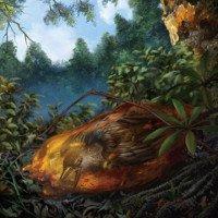 Hóa thạch chim nguyên vẹn nhất trong hổ phách 99 triệu năm