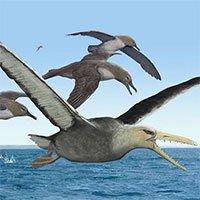 Hóa thạch cổ nhất của chim khổng lồ sải cánh tới 6,4m
