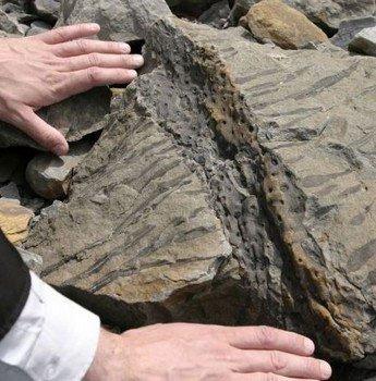 Hóa thạch dấu chân động vật nhỏ nhất thế giới