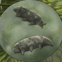 Hóa thạch gây sốc của sinh vật bất tử, sống được ở hành tinh khác