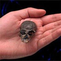 Hóa thạch hộp sọ khỉ cách đây 20 triệu năm tiềm năng hé lộ sự tiến hóa của não người
