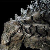 Hóa thạch khủng long 110 triệu năm