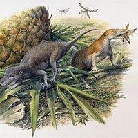 Hóa thạch mới phát hiện tiết lộ cuộc sống của động vật có vú sơ khai