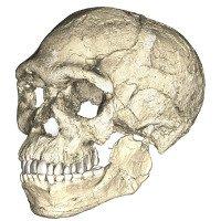 Hóa thạch người 300.000 tuổi hé lộ nguồn gốc bất ngờ của nhân loại