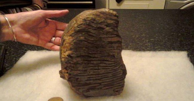 Hóa thạch răng voi ma mút ba triệu năm tuổi trên bờ biển Anh