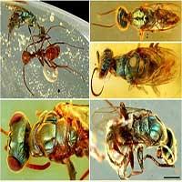 Hóa thạch tiết lộ màu sắc của côn trùng 99 triệu năm tuổi