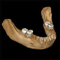 Hóa thạch xương 160.000 năm lý giải biến thể gene của con người