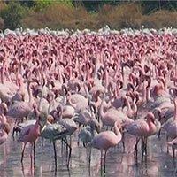 Hơn 150.000 con chim