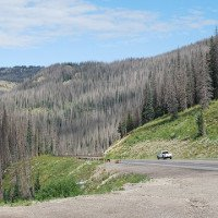 Hơn 800 triệu cây rừng ở Mỹ