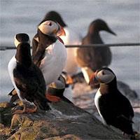 Hòn đảo có loài chim vừa trở về từ