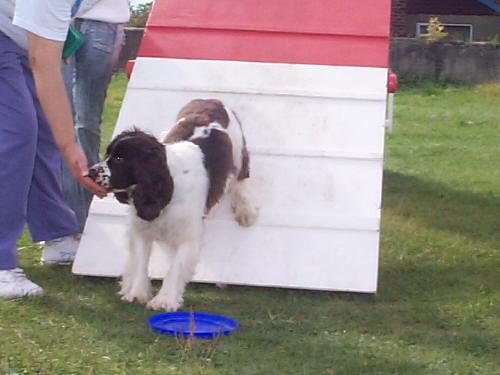 Huấn luyện chó như thế nào?
