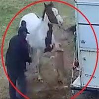 Hung hăng tấn công ngựa, chó Pitbull nhận bài học nhớ đời