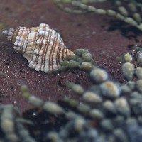 Hy vọng mới tìm ra thuốc chữa ung thư từ loài sên biển