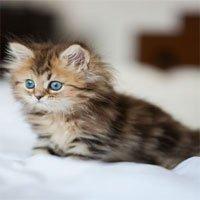 Khả năng kỳ lạ của mèo