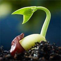 Khả năng sống sót của hạt giống trong vũ trụ