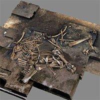 Khai quật hóa thạch voi 300.000 năm tuổi