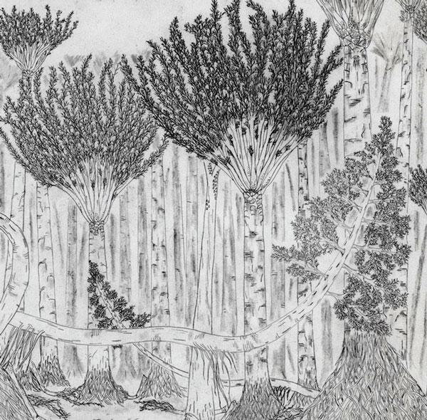 Khai quật rừng hóa thạch 380 triệu năm tuổi