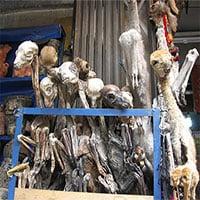 Khám phá khu chợ phù thuỷ thần bí ở Bolivia