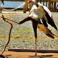 Khám phá loài chim được mệnh danh