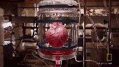 Khám phá quá trình tạo ra quả tim đập