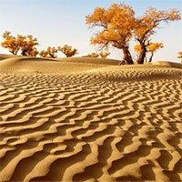 Khám phá sa mạc lớn nhất Trung Quốc, nơi được ví là chốn