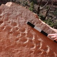 Khám phá thú vị từ dấu chân hóa thạch 313 triệu năm tuổi