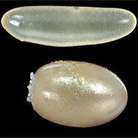 Kho dữ liệu khổng lồ góp phần lý giải những hình thù kỳ lạ của trứng côn trùng