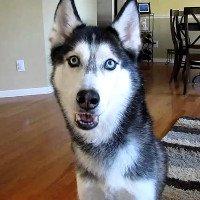 Khoa học cho rằng chó cũng có thể trò chuyện như con người vậy