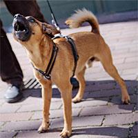 Khoa học chứng minh: Loài chó có thể dễ dàng nhận biết ai là kẻ xấu, ai là người tốt