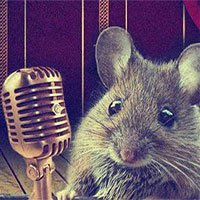 Khoa học lý giải cách loài chuột