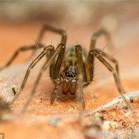 Khoa học mới xác định được thời điểm nhện dễ xuất hiện nhất trong nhà