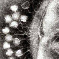 Khoa học phát hiện ra những con virus khổng lồ với khả năng