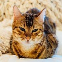 Khoa học tiết lộ cách làm quen với mèo hiệu quả: Hãy chớp mắt chậm rãi