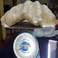 Khối ngọc trai 34kg trong nhà ngư dân Philippines