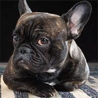 Khôn như chó: Loài vật này biết khi nào con người đang nói dối