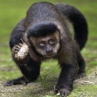 Không dập được dịch sốt, dân Brazil thảm sát khỉ
