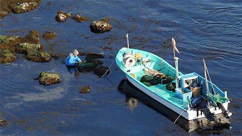Không quá lo ngại hải sản nhiễm phóng xạ