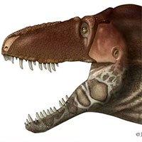 Khủng long bạo chúa Tyrannosaurus dựa vào giác quan thứ sáu để