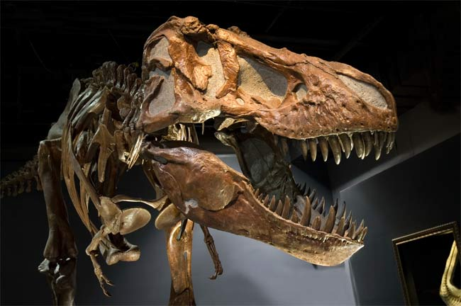 Khủng long T. rex là sát thủ thực sự