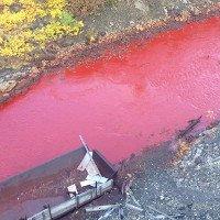 Kinh hoàng vì sông đổi màu, đỏ lừ như máu ở Nga