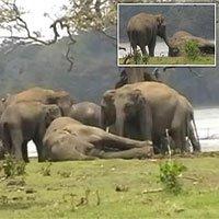 Kinh ngạc cảnh 300 con voi khóc thương ở